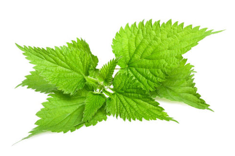 Nettle is an ingredient in ProTress and is naturally rich in Silica and Sulphur, which has a nourishing effect on your hair, leaving hair shinier and healthier