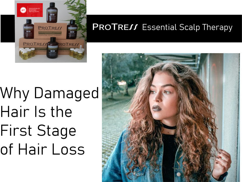 Why Damaged  Hair Is the First Stage  of Hair Loss