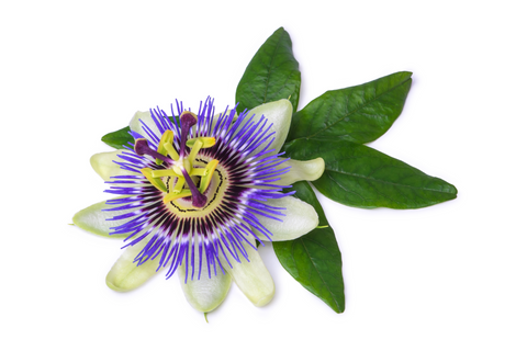 protress is made with passion flower