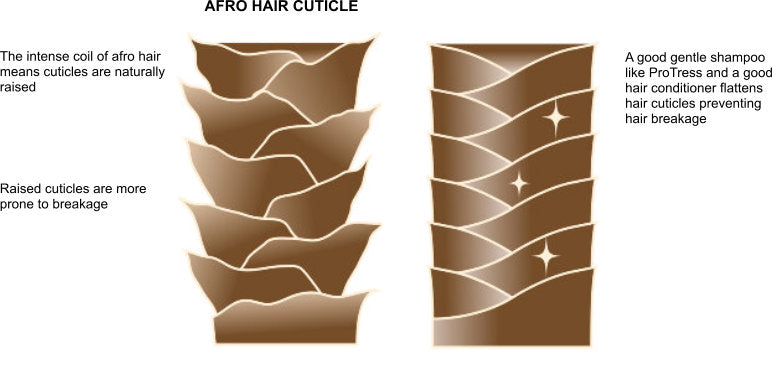 afro hair cuticle