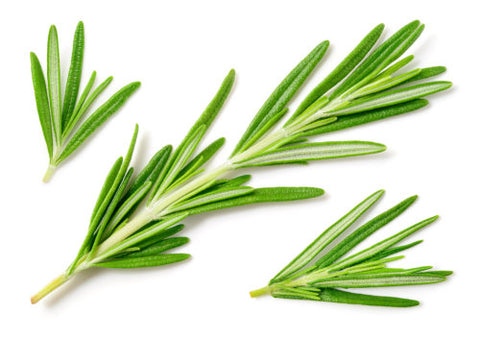 Rosemary is an ingredient in ProTress Energising shampoo and helps to boost the scalps blood circulatory system and as a result promotes hair growth