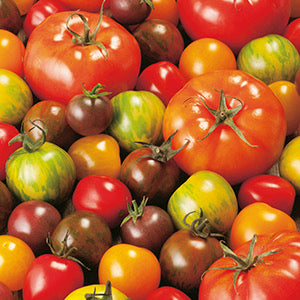 Tomatoes Special Mix 400g IOW - not certified organic