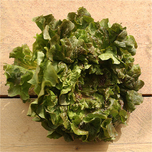 Lettuce Red Oakleaf