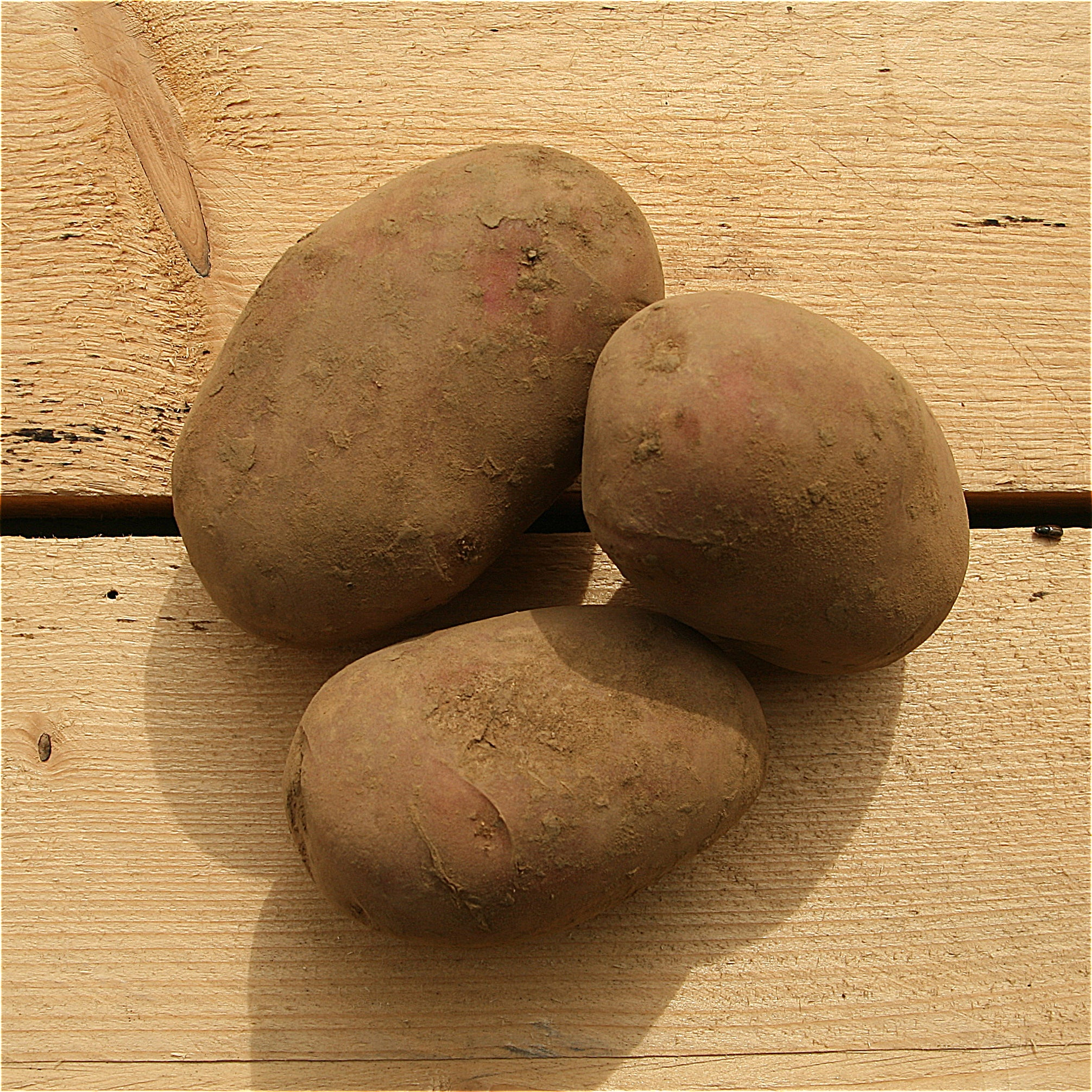 Potatoes Red Rudolph 1kg Herefordshire