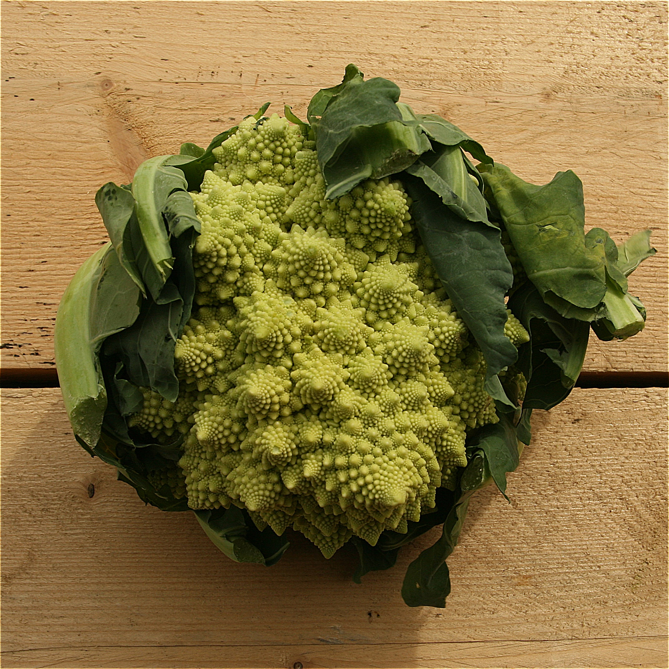 Cauliflower Romanesco (BD) Kent