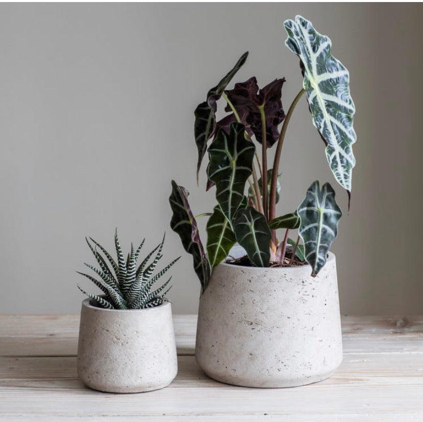 Set of 2 Stratton grey pots,  - Bramley & White | Upholstery, Homewares & Furniture