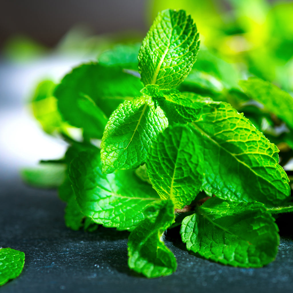 Keep Your Cool with Peppermint Oil
