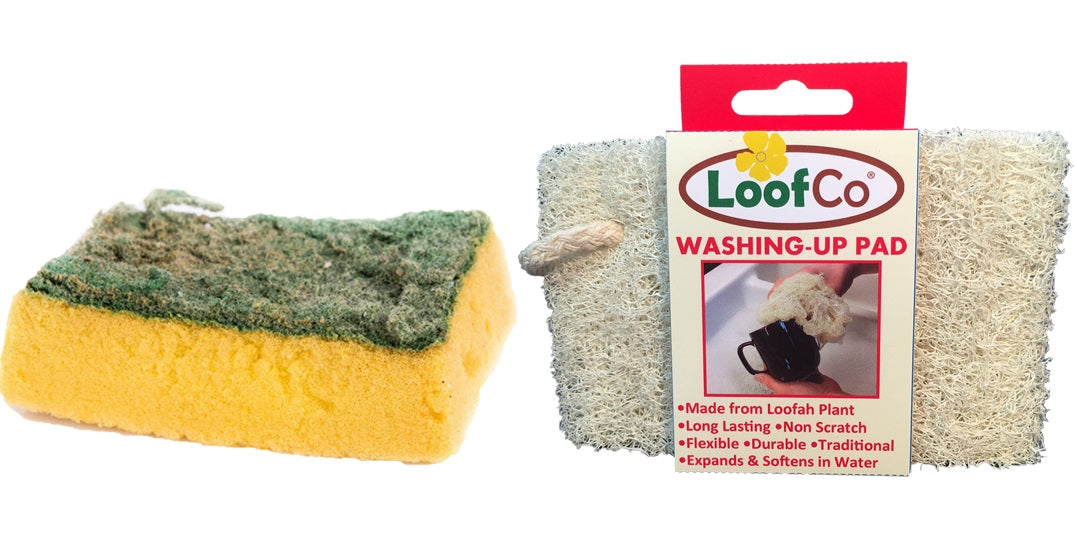 What's Living in Your Kitchen Sponge?