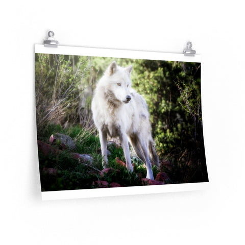 """Aria Ever Watchful"" Premium Matte horizontal posters by John Ramer Photography"
