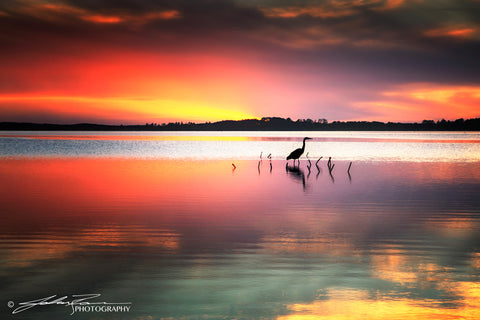 The Heron by John Ramer Photography