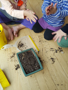 Indoor Winter Gardening with kids: Planting onions