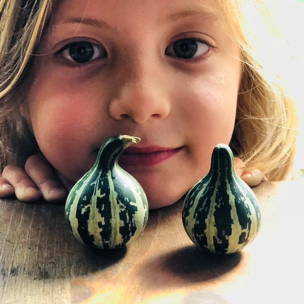 Asheville Grown Garden Seeds- The 2019 Kids Seed Co. Catalog