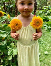 Sunflower (Teddy Bear)