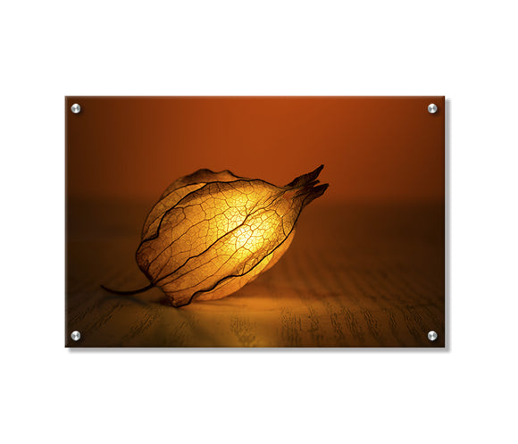 Peruvian Ground Cherry Printed on Brushed Aluminum