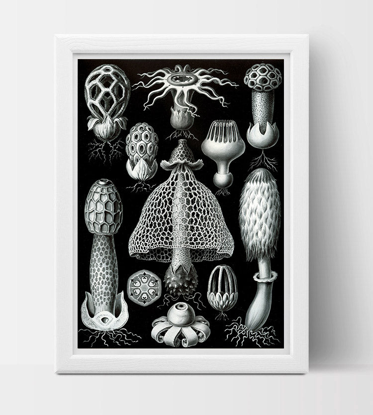 Basimycetes (Mushrooms) Drawing (1904) by Ernst Haeckel Poster