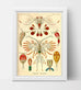 Copepoda Drawing (1904) by Ernst Haeckel Poster