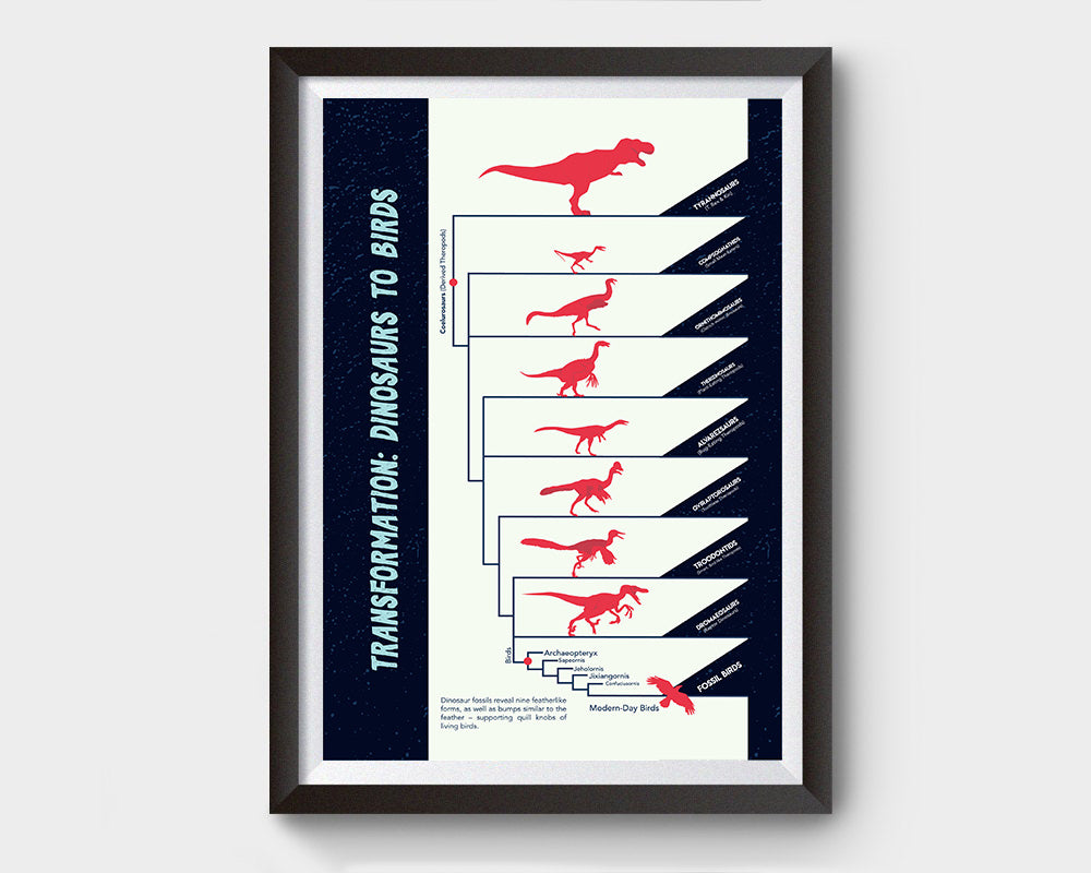 Dinosaurs to Birds Evolution Poster Wall Decor