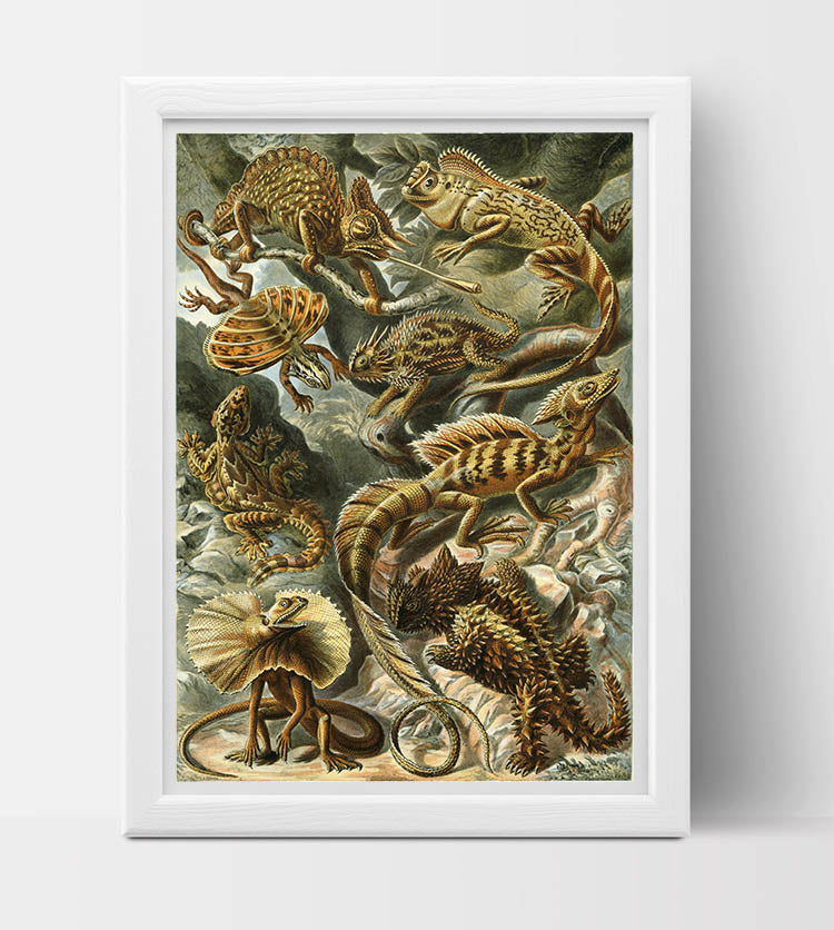 Lacertilia (Lizards) Drawing (1904) by Ernst Haeckel Poster
