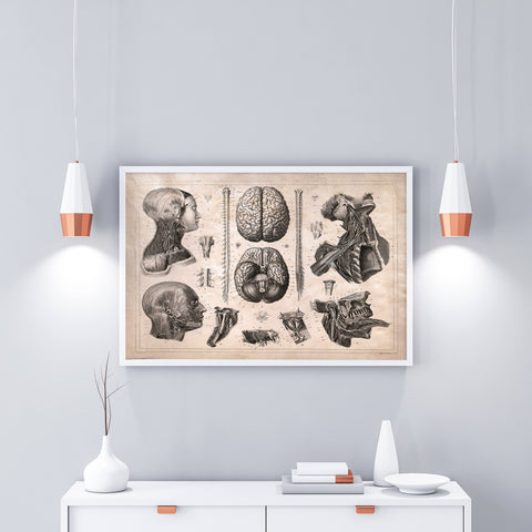Vintage Anatomy of the Nervous System Wall Decor Poster