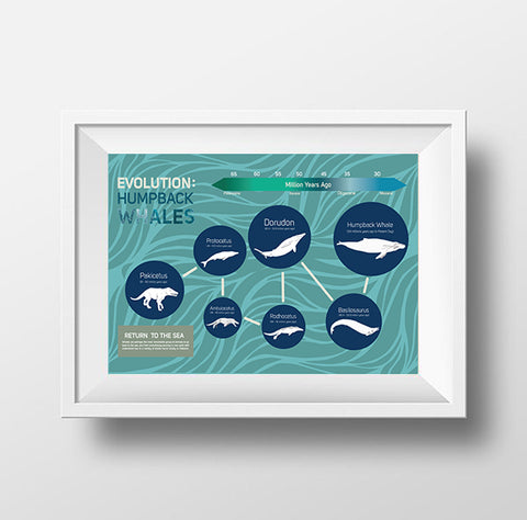 Whale Evolution Poster Wall Decor