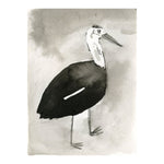 Black and White Stork Bird