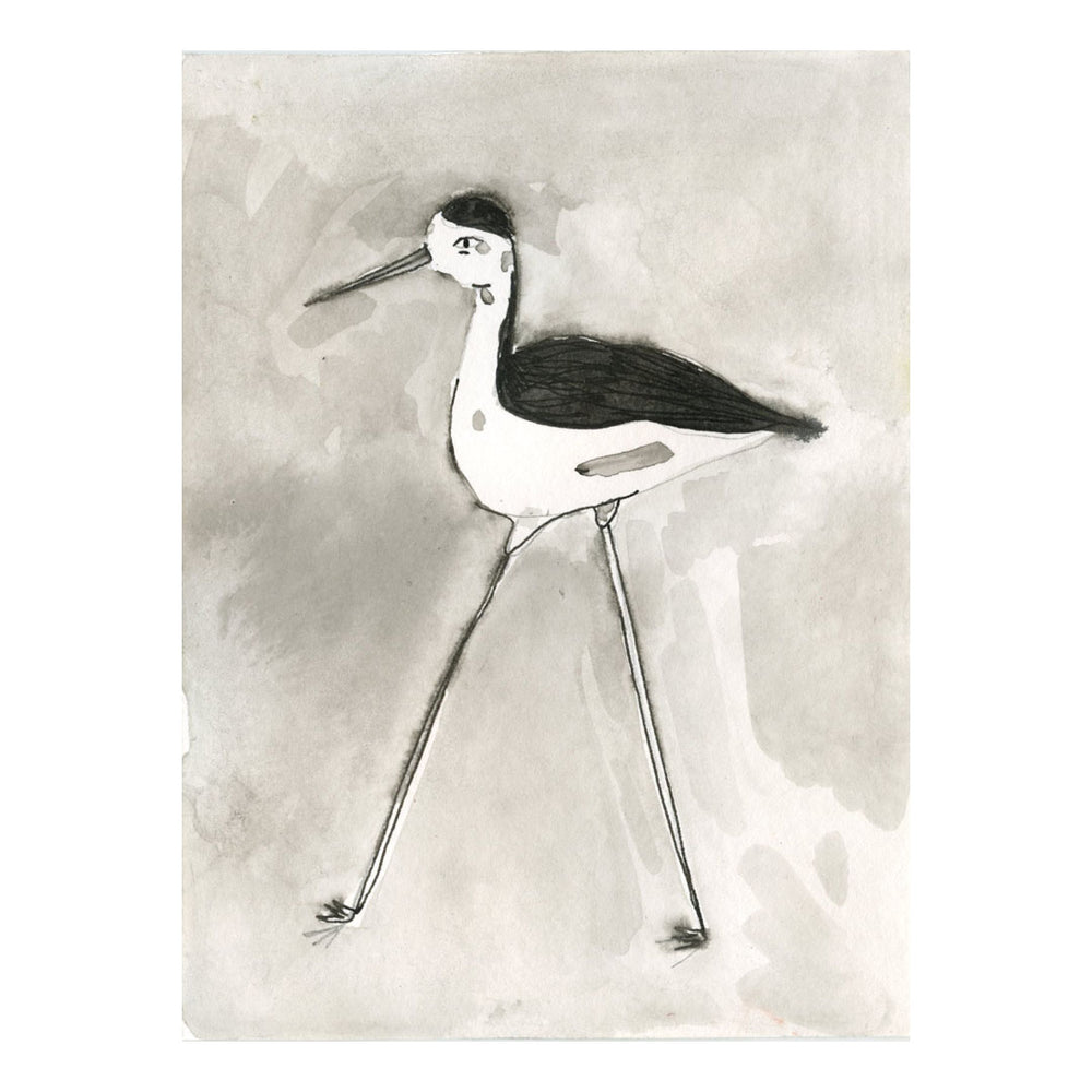 Black and White Hawaiian Stilt Bird