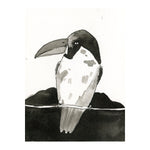 Black and White Toucan Bird