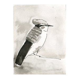 Black and White Flycatcher Bird2