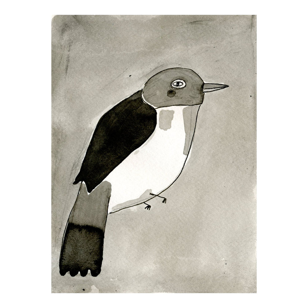 Black and White Vanga Bird