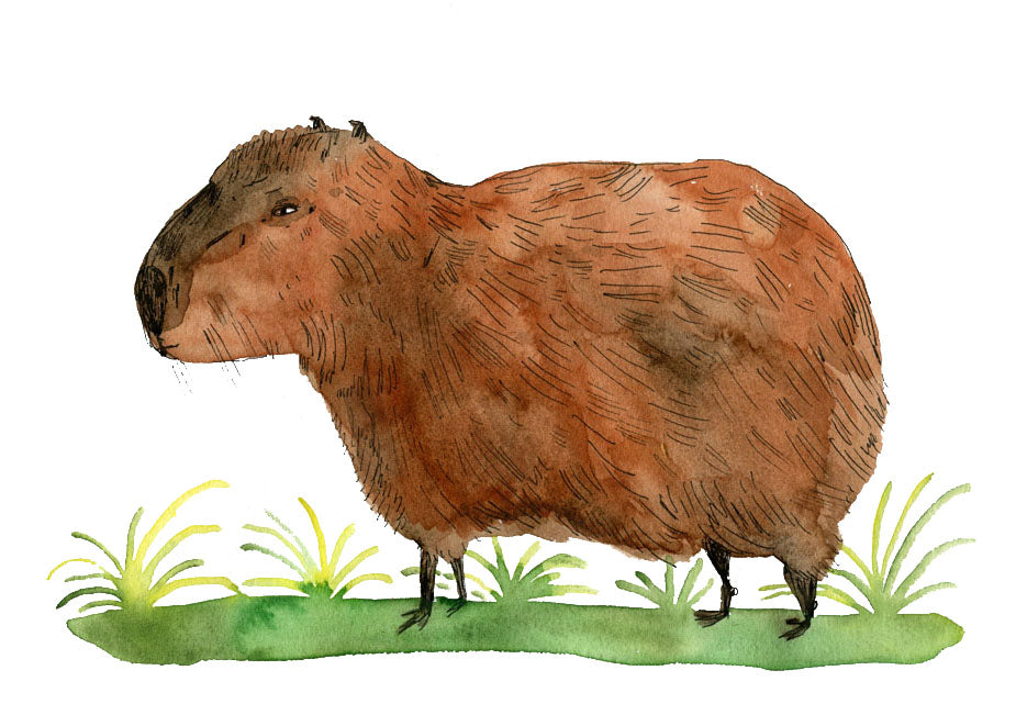 capybara illustration
