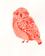 Coral Owl Painting
