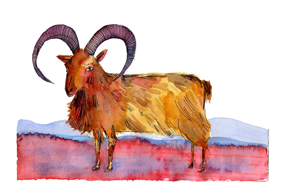Mouflon illustration