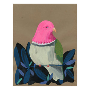 Pink Headed Fruit Dove