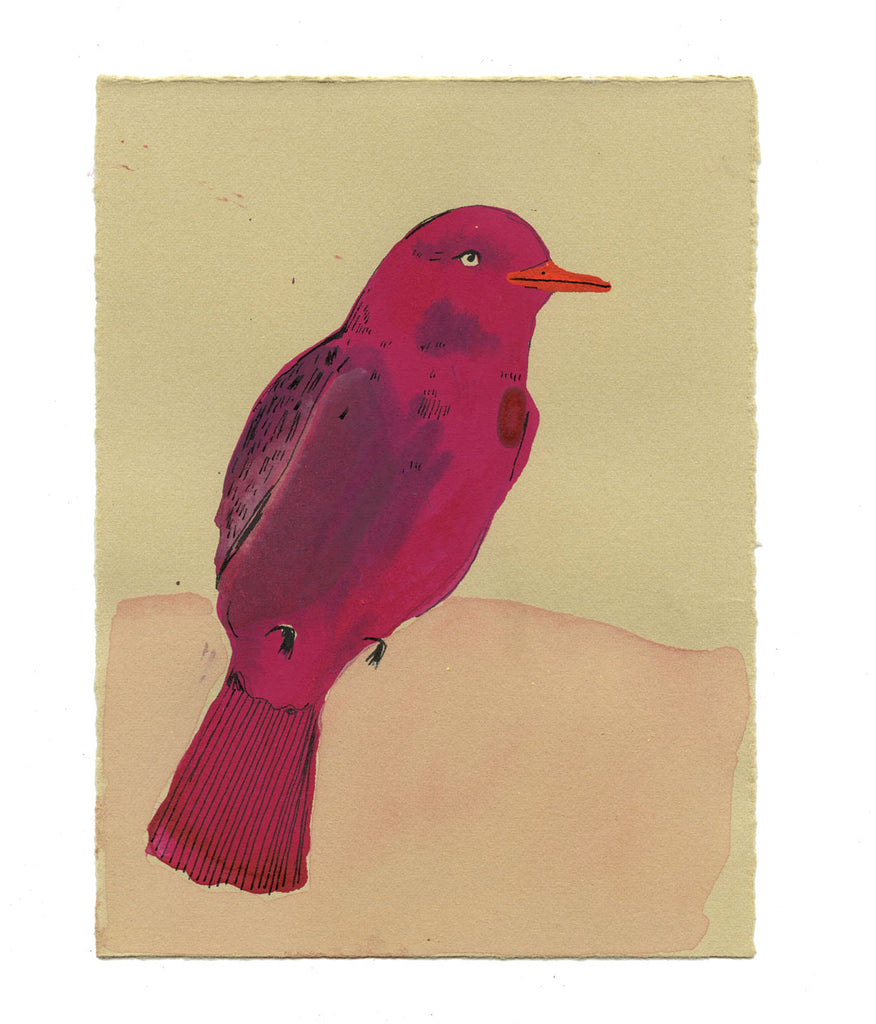Pompadour Cotinga artwork