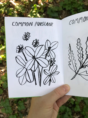 Common Garden Weeds