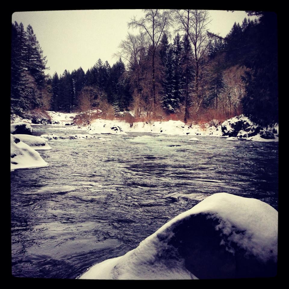 winter steelhead cowlitz river