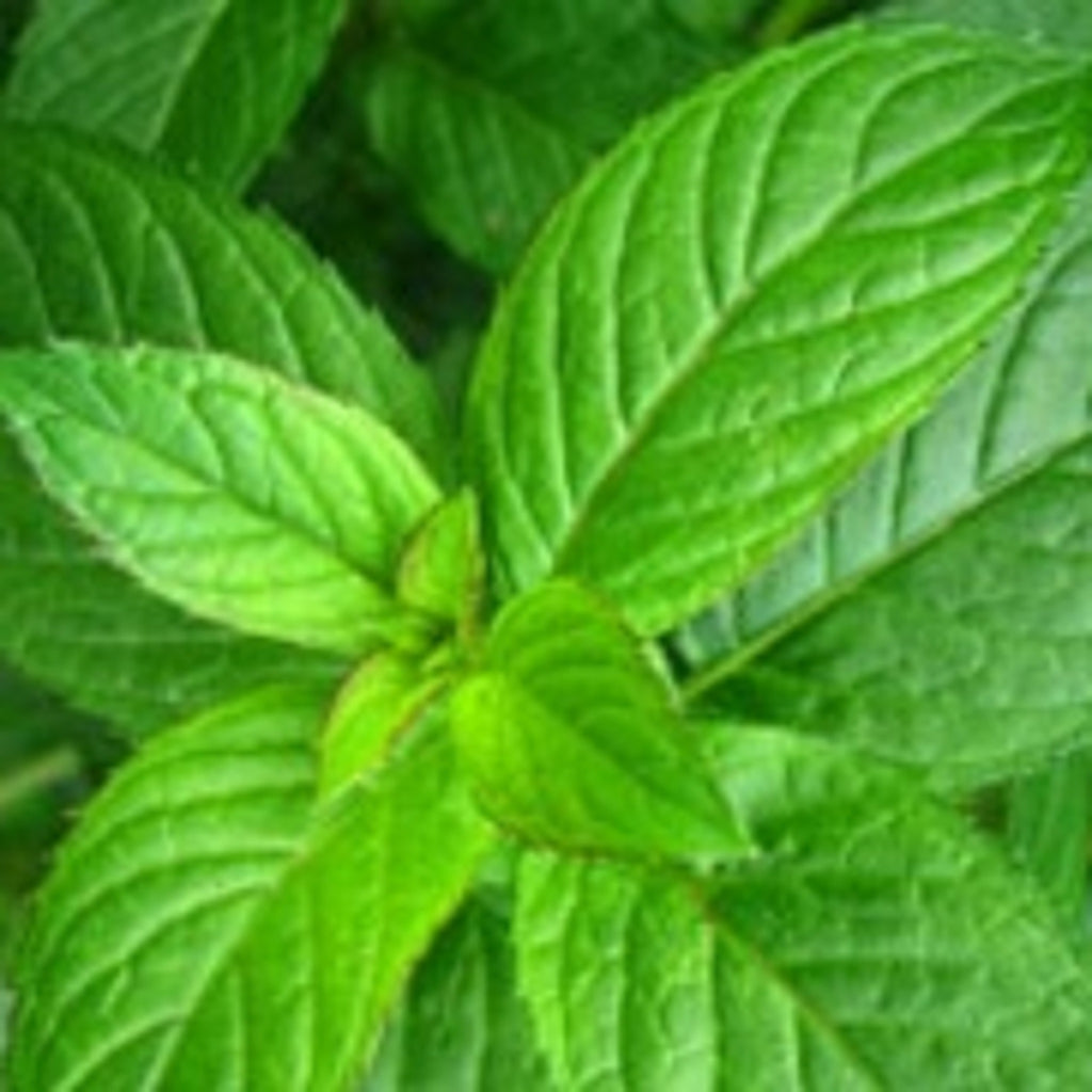 Peppermint Essential Oil,Essential Oils - Karma Suds