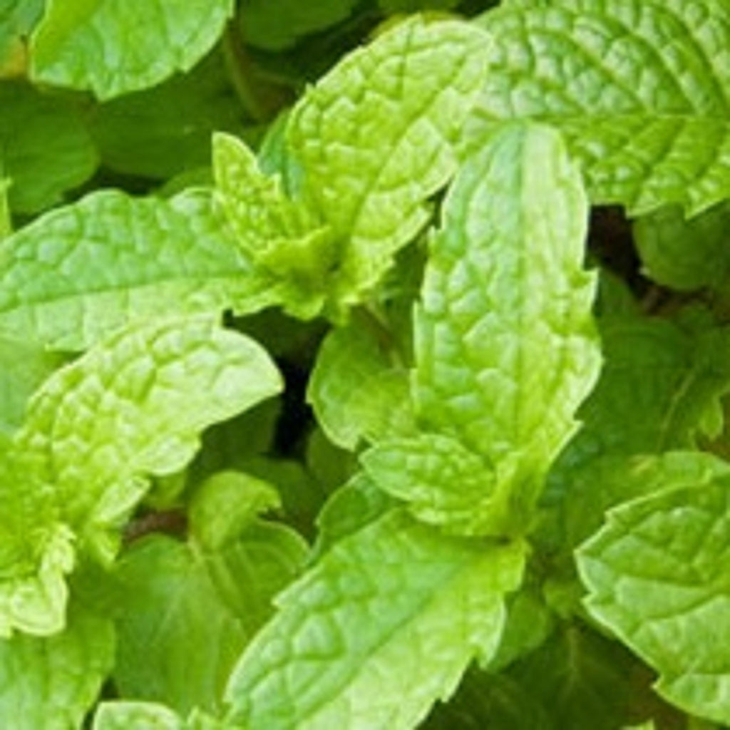 Spearmint Essential Oil,Essential Oils - Karma Suds