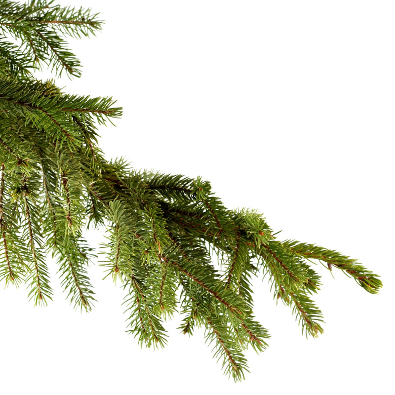 Spruce Essential Oil,Essential Oils - Karma Suds