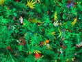 Bulk Lego (R) Plants, Grass, Trees, Leaves, Flowers