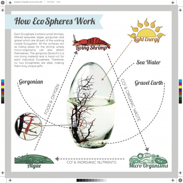 how to make an ecosphere with a cherry shrimp