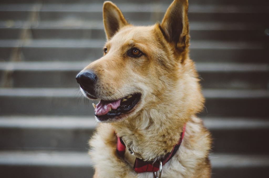 The top animal and pet trackers to keep tabs on your furry friend's mind & health