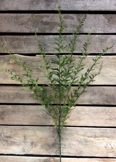Morgan Green Fishtail Fern Spray