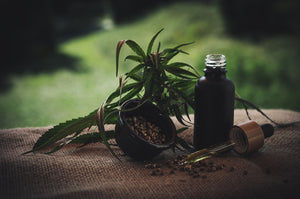 Utilizing Hemp Oil From Head to Toe: Discussing its Many Cosmetic Uses and Benefits