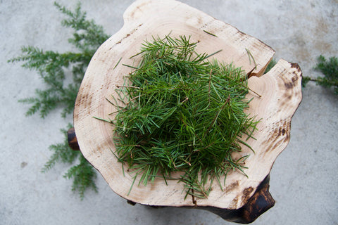 Fresh Pacific Northwest Douglas-Fir Needles