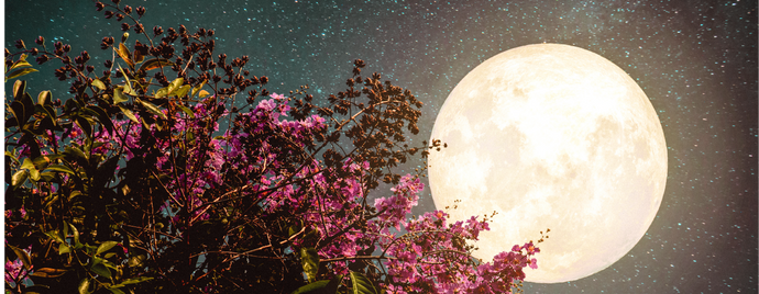 Harness the Energy of  an August Moon