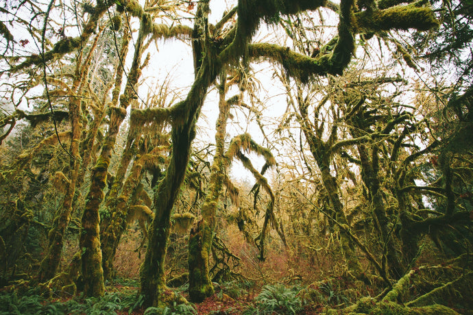 The 7 Most Supernatural Forests in the US