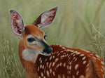 The Beautiful Fawn