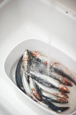 Sardines soaking while cleaning