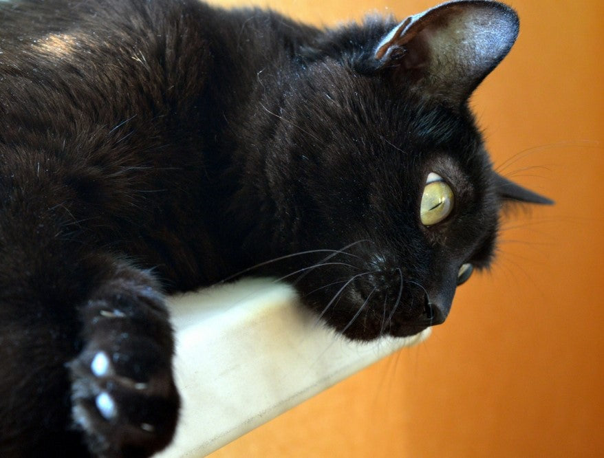 What Nuisance Behaviors Do Cat Owners Face? And what to do about it!